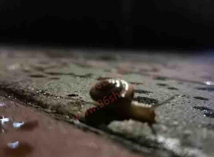 追逐梦想的蜗牛-第1张图片-96试玩网