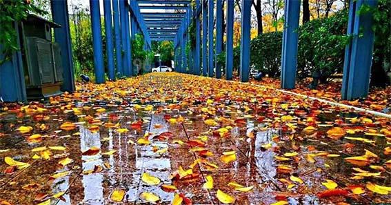 缭绕秋雨动,凄凄烟雨繁-第3张图片-96试玩网