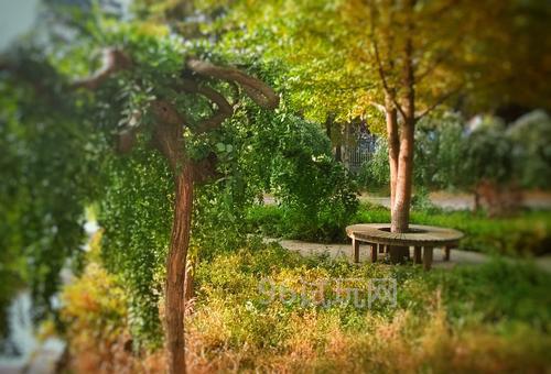 我不禁感叹,秋天的校园是如此恬静美好-第1张图片-96试玩网